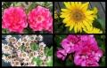 Blumengrüße 071