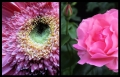 Blumengrüße 072