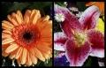 Blumengrüße 073
