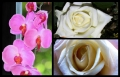 Blumengrüße 074