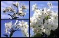 Blumengrüße 075