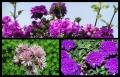 Blumengrüße 076