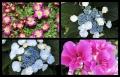 Blumengrüße 077