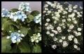 Blumengrüße 078