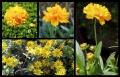 Blumengrüße 079