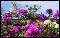 Blumengrüße 080
