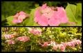 Blumengrüße 085