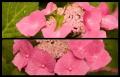 Blumengrüße 086