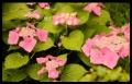 Blumengrüße 087