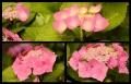 Blumengrüße 088