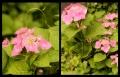 Blumengrüße 089