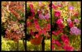 Blumengrüße 090