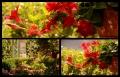 Blumengrüße 091