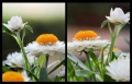 Blumengrüße 094