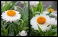 Blumengrüße 095