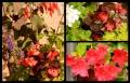 Blumengrüße 096