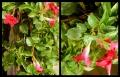 Blumengrüße 097