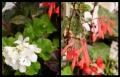 Blumengrüße 098