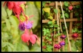 Blumengrüße 099