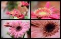 Blumengrüße 100