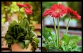 Blumengrüße 101