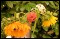 Blumengrüße 103