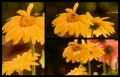 Blumengrüße 105