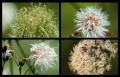 Blumengrüße 113