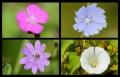 Blumengrüße 114