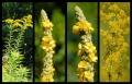 Blumengrüße 115
