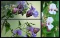 Blumengrüße 116