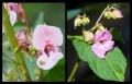 Blumengrüße 117