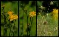 Blumengrüße 118
