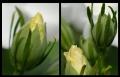 Blumengrüße 119