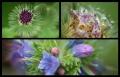 Blumengrüße 122