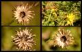 Blumengrüße 123