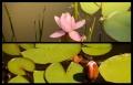 Blumengrüße 125