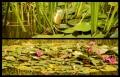 Blumengrüße 126