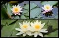 Blumengrüße 128