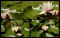 Blumengrüße 129