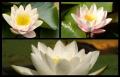 Blumengrüße 130