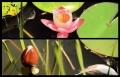 Blumengrüße 131