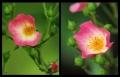 Blumengrüße 132
