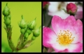 Blumengrüße 133
