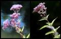 Blumengrüße 134