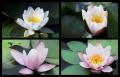 Blumengrüße 135