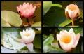 Blumengrüße 136