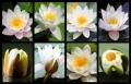 Blumengrüße 137