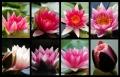 Blumengrüße 138