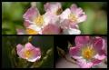 Blumengrüße 139